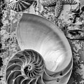 Nautilus Shell With Starfish by Garry Gay