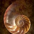 Nautilus by Tom Mc Nemar