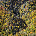 Nc Fall Foliage 0544 by Bob Neiman