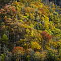Nc Fall Foliage 0559 by Bob Neiman