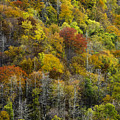 Nc Fall Foliage 0561 by Bob Neiman