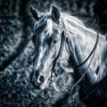Nebraska Rodeo Roping Horse... by Allen Olson
