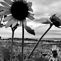 Nebraska Sky by Tingy Wende