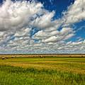 Nebraska Wheat Fields by Ginger Wakem