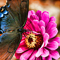 Nectar Feast by Ola Allen