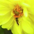 Nectar by Ignacio Leal Orozco