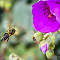 Nectar Run by Brian Tada