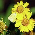 Nectar Seeker by Patricia Griffin Brett