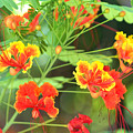 Nectar by Todd Hummel