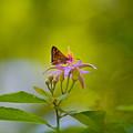 Nectar Treat by Az Jackson