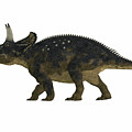 Nedoceratops Side Profile by Corey Ford