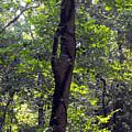 Needle Hook Tree by Eva Thomas