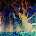 Negative Tree And Sunbeams by Mo Barton