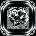 Negro by Mona Stut