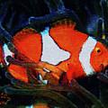 Nemo's Marlin by Kat Solinsky