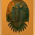 Neometacanthus Fossil Trilobite by Melissa A Benson