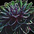 Neon Garden Dahlia I by Judith Turner
