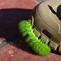 Neon Geen Caterpillar Loves Crocs by Sabine Greger