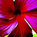 Neon Magnolia by Vicki Lynn Sodora