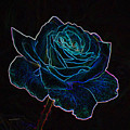 Neon Rose 3 by Ernie Echols