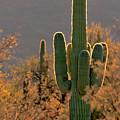 Neon Saguaro #2 by Susan Rissi Tregoning