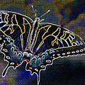 Neon Swallowtail Butterfly by Janet Pugh