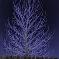 Neon Tree by Charles Benavidez