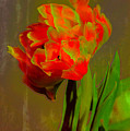 Neon Tulip by Donna Bentley