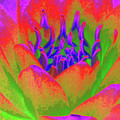 Neon Water Lily - Photopower 3370 by Pamela Critchlow