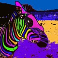 Neon Zebra by David Carter