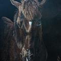 Nervous Colt  Milltown Fair by Pauline Sharp