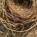 Nest 913 by Modern Art