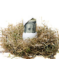 Nest Egg by Michael Ledray