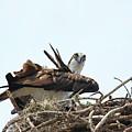Nesting At Walmart by Deborah Benoit