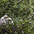 Nesting Chicks by Mark Fuge
