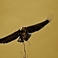Nesting by Diana Hatcher