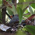 Nesting by Kim