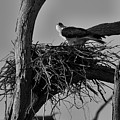 Nesting V2 by Douglas Barnard