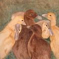 Nestlings.  Ducklings Huddled Together by Lynn ACourt