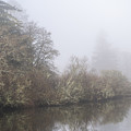 Netul River Fog by Robert Potts
