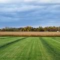 Neunen Fields by Rosamund Smears