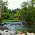 Neuse Falls Trail by Audrey Priel