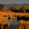 Nevada Marshlands At Sunset by Frank Wilson