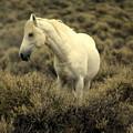 Nevada Wild Horses 4 by Marty Koch