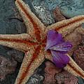 Never Forgotten- Starfish Art by Kathy  Symonds