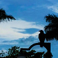 Nevermore In The Tropics by Susan Vineyard