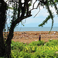 New Beginnings by Lydia Holly