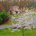 New Blossoms Old Barn by Keith Burgess