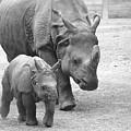 New Born Rhino And Mom by Jennifer Craft