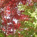 New England Autumn Globe by Kristine Nora